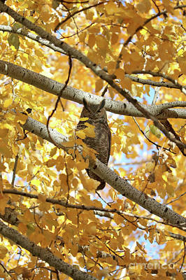 Photograph - Owl Hiding In Autumn Tree by Carol Groenen