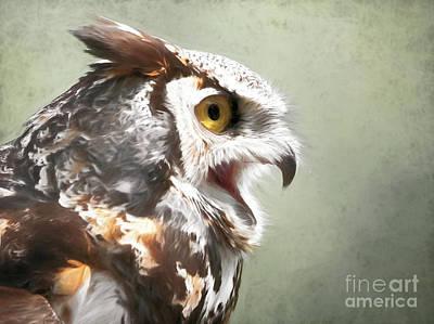 Photograph - Owl In Profile by Sue Harper