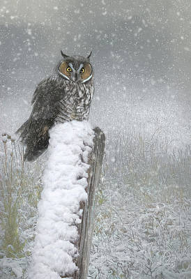 Kitchen Spices And Herbs - Owl in Snow by Debi Boucher