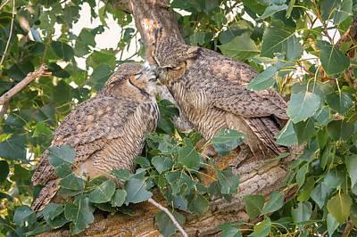 Photograph - Owl Kiss by Loree Johnson