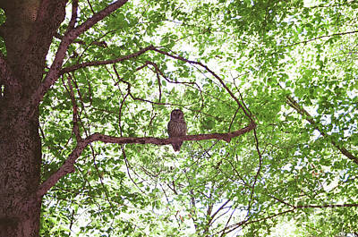 Photograph - Owl on the Valley Way - Mt. Madison by Larry Davis Custom Photography
