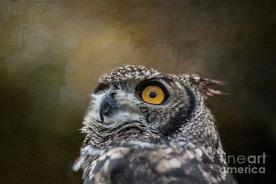 Photograph - Owl's Eye by Eva Lechner