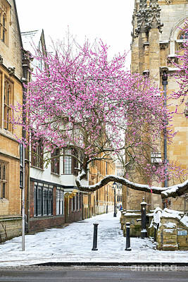 Photograph - Oxford Almond Tree Blossom In The Snow by Tim Gainey