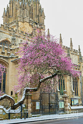 Art Print featuring the photograph Oxford Almond Tree Blossoming In The Snow by Tim Gainey