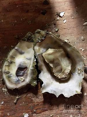Photograph - Oyster by Flavia Westerwelle