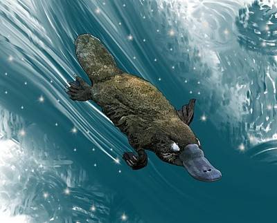 Child Wall Art - Digital Art - P Is For Platypus by Joan Stratton