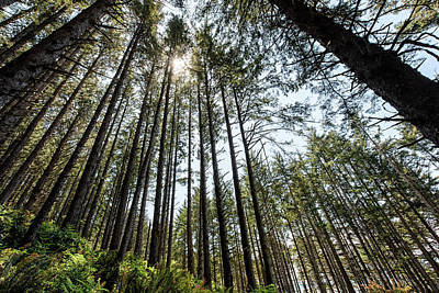 Photograph - Pacific Northwest Pine Trees by Cathy Neth