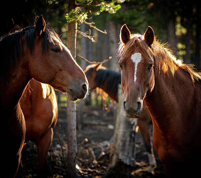 Photograph - Pack Horses 1 by Philip Rispin