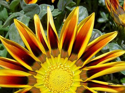 Photograph - Page 82 In The Book, Peace In The Present Moment. Sunflower Explosion by Michele Penn