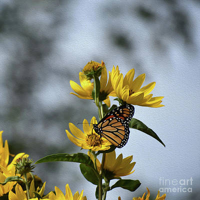 Photograph - Painted Beauty In The Shade by Skip Willits