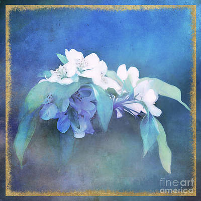 Photograph - Painted Crabapple Blossoms by Anita Pollak