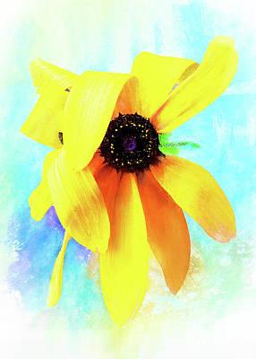 Photograph - Flopsy - A Charming Wild Black-eyed Susan  by Anita Pollak