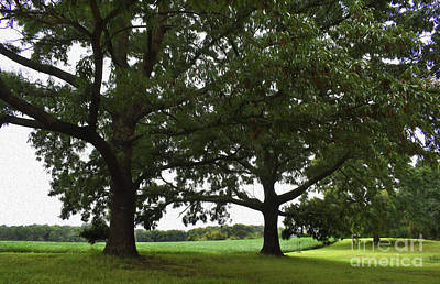Photograph - Painted In The Shade Of The Old Oak Trees by Skip Willits