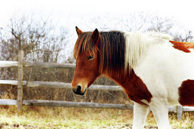 Photograph - Painted Pony by Tikvah's Hope