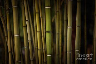Painting - Painting Of A Bamboo Grove II by George Atsametakis