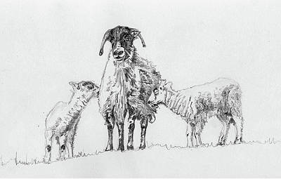 Drawing - Pair by Helen White
