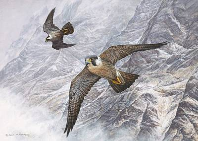 Painting - Pair of Peregrine Falcons in Flight by Alan M Hunt