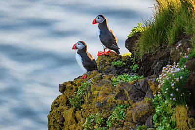 Photograph - Pair Of Puffins by Michael Blanchette