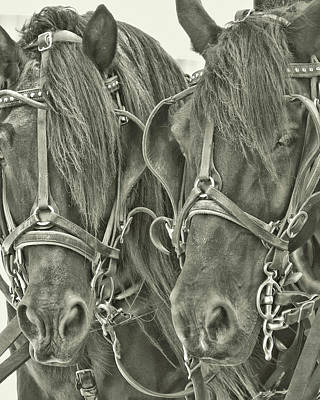 Photograph - Paired Carriage Ponies by JAMART Photography