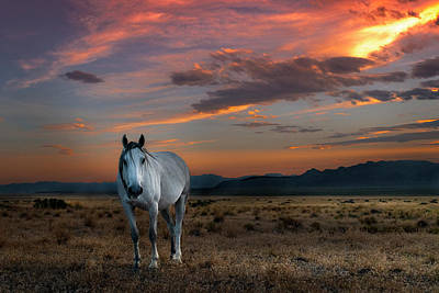 Photograph - Pale Horse by Michael Ash