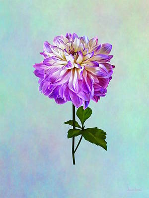 Photograph - Pale Pink And White Dahlia by Susan Savad