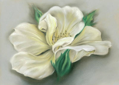 Pastel - Pale Yellow Rose And Green Rosebuds by MM Anderson