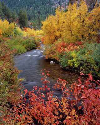 Palisades Creek Canyon Autumn Art Print by Leland D Howard