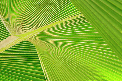 Photograph - Palm Detail by Ideeone