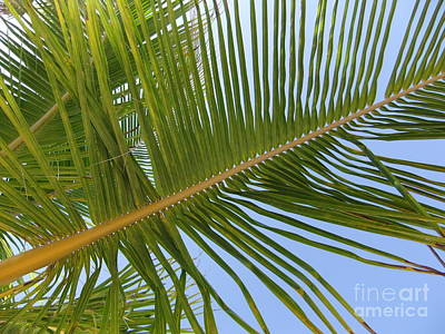 Garden Tools - Palm In The Sky by Maria Faria Rodrigues