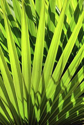 Photograph - Palm Portrait I by Leda Robertson