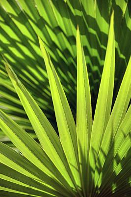 Photograph - Palm Portrait II by Leda Robertson