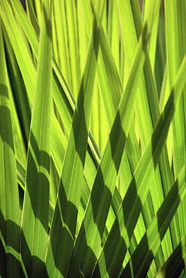 Photograph - Palm Portrait IIi by Leda Robertson