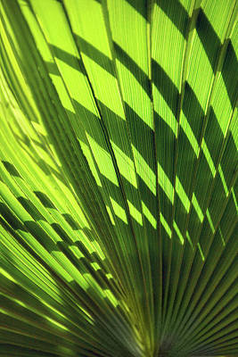 Photograph - Palm Portrait Iv by Leda Robertson