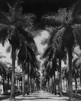 Object Photograph - Palm Street by Fox Photos