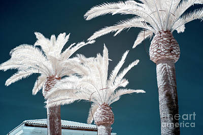 Photograph - Palm Tree Blues In Sorrento Infrared by John Rizzuto