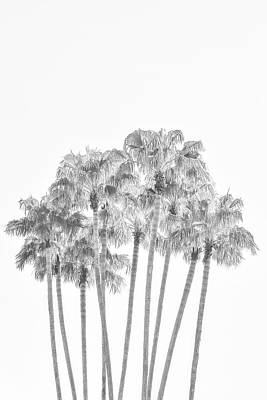 Digital Art - Palm Tree Grove In Black And White by Ramona Murdock