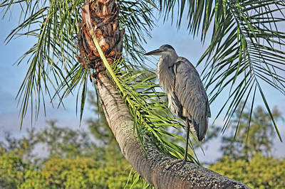 Photograph - Palm Tree Heron by HH Photography of Florida