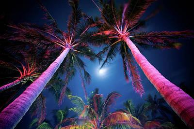 Photograph - Palm Tree Illumination by Zxvisual
