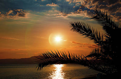 Photograph - Palm Tree On The Beach by Milena Ilieva