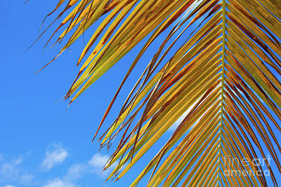 Kitchen Spices And Herbs - Palm Tree Skys by Alisha Paul