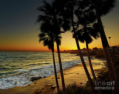 Photograph - Palm Tree Sunset by Steve Ondrus