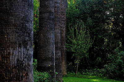 Kids Alphabet - Palm Tree Trunks by Cassi Moghan