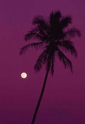 Photograph - Palm Tree With Moon In A Bright Pink by Design Pics/ron Dahlquist