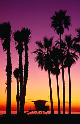 Photograph - Palm Trees At Sunset, Venice Beach, Los by Richard  Cummins