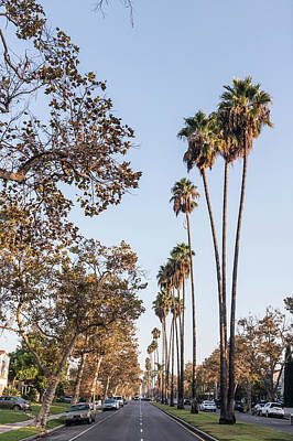 Photograph - Palm Trees In Hollywood  by John McGraw
