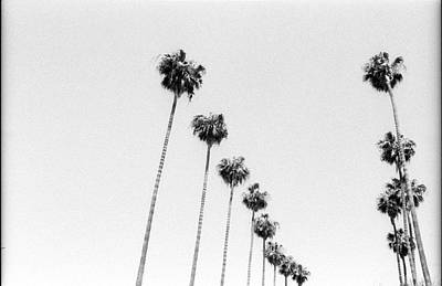 Photograph - Palm Trees Line The Street In Los by Stephen Albanese