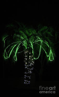 Photograph - Palmetto Christmas by Skip Willits