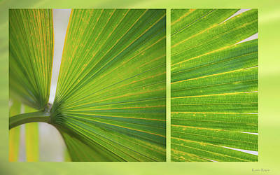 Photograph - Palmetto by Karen Rispin