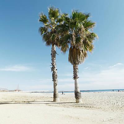 Photograph - Palms by Am2photo