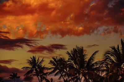 Photograph - Palms Below The Fire Clouds by John Bauer